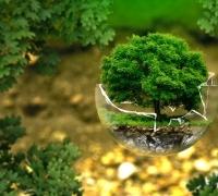 Penyalai News gagas program Ayo Tanam Pohon sebagai bentuk memperingati Hari Pohon Sedunia