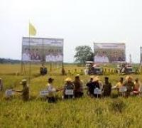 Pemerintah Kabupaten Rohil berharap  menjadi pusat  lumbung Padi terbesar diriau