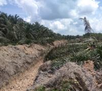 Apkasindo Ancam Laporkan Kepala Capem Bank Riau Kepri terkait Dana PSR