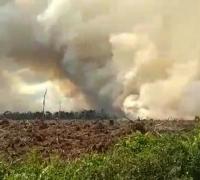Terkait Karhutla, Formasi Riau minta Presiden Jokowi Evaluasi Izin PT. Arara Abadi