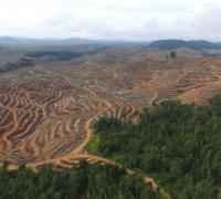 Jikalahari Lapor ke LAM Riau terkait PT Arara Abadi Tidak Akui Tanah Ulayat Suku Sakai