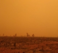 Mendaulat Revegetasi Lahan Untuk Perubahan Iklim
